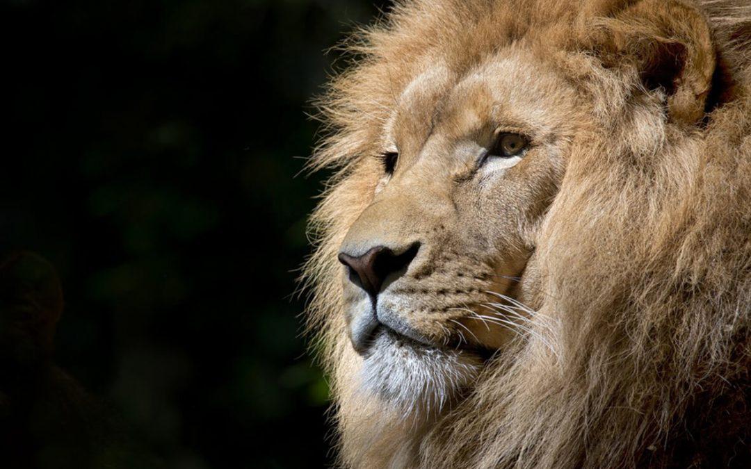Schenken Sie Ihrem inneren Löwen die Freiheit!
